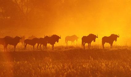 Multivision «Namibia Botswana-Wildnis Afrika» von Thomas Sbampato