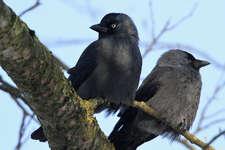 Für «Early Birds»: Poetische Reise durch die Natur