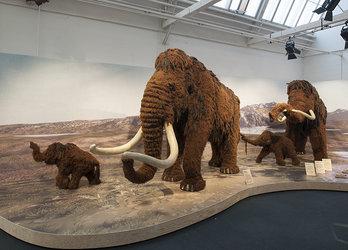 Lebensgrosse Mammuts in der Shedhalle.  Foto: Museum für Urgeschichte(n) Zug, Res Eichenberger.