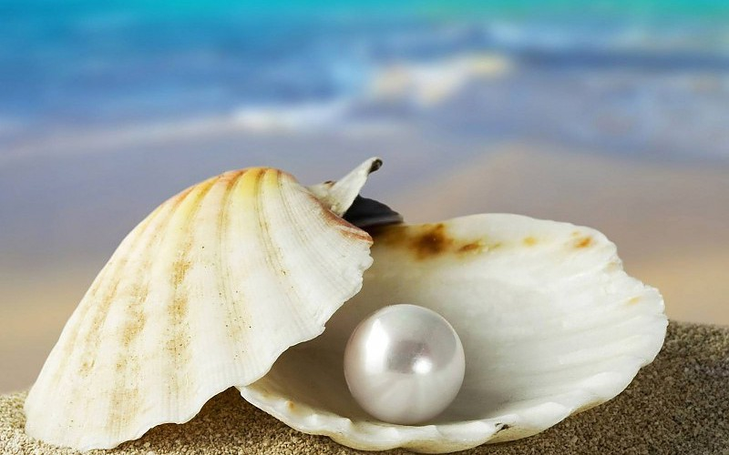 Ocean Shell pearl oyster