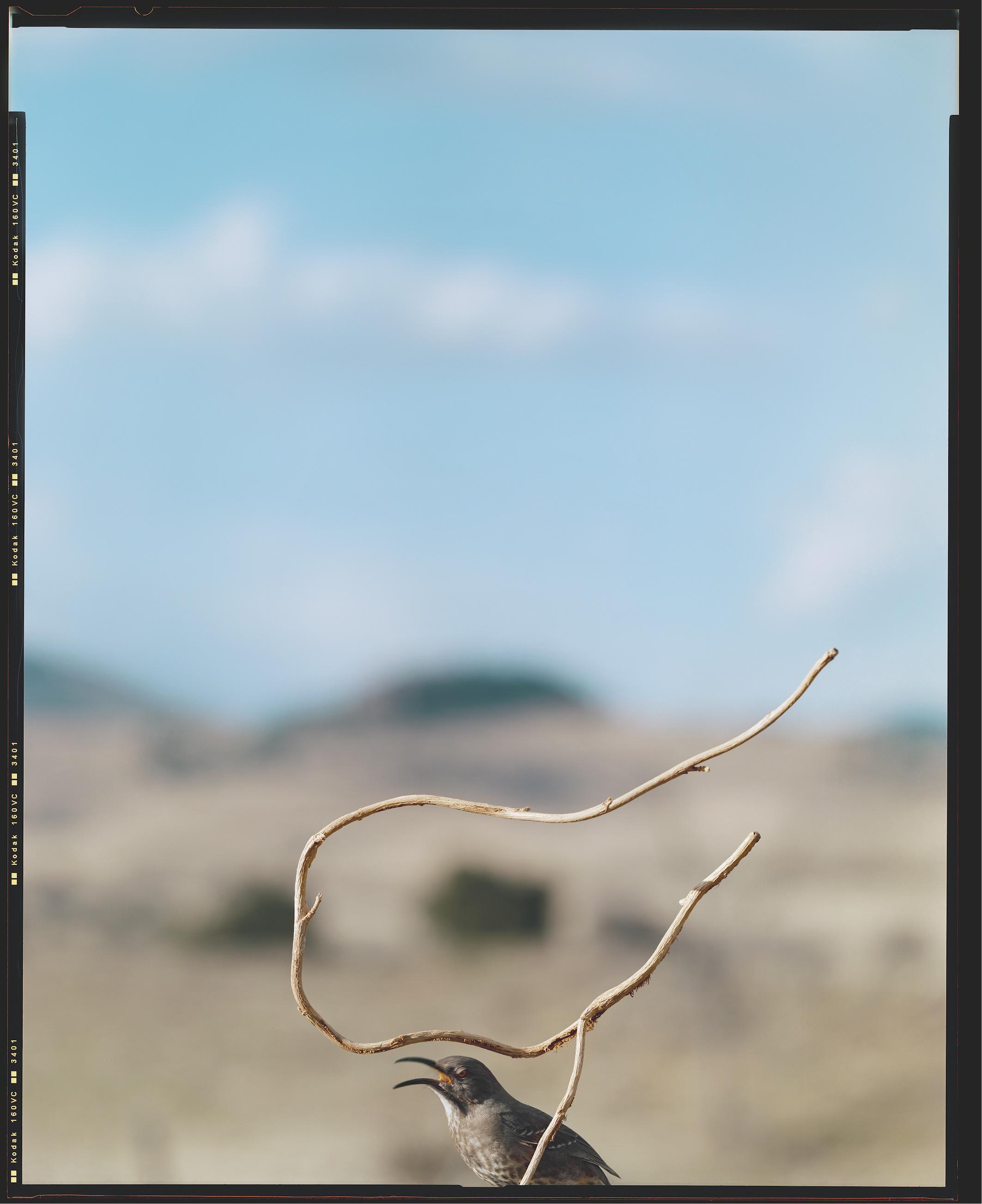 Jean Luc Mylayne - Herbst im Paradies