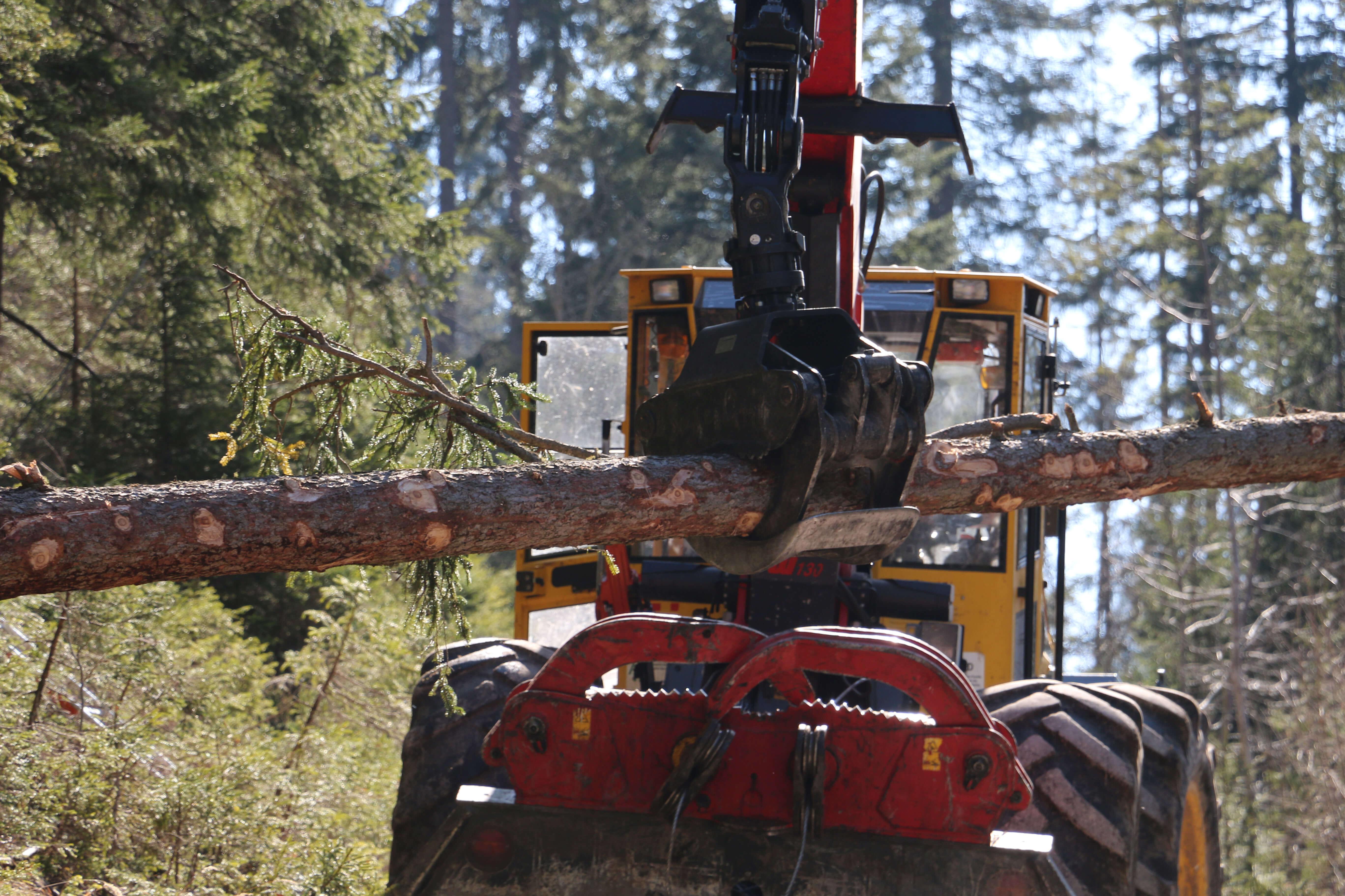 Waldtag Forstrevier Diemtigtal