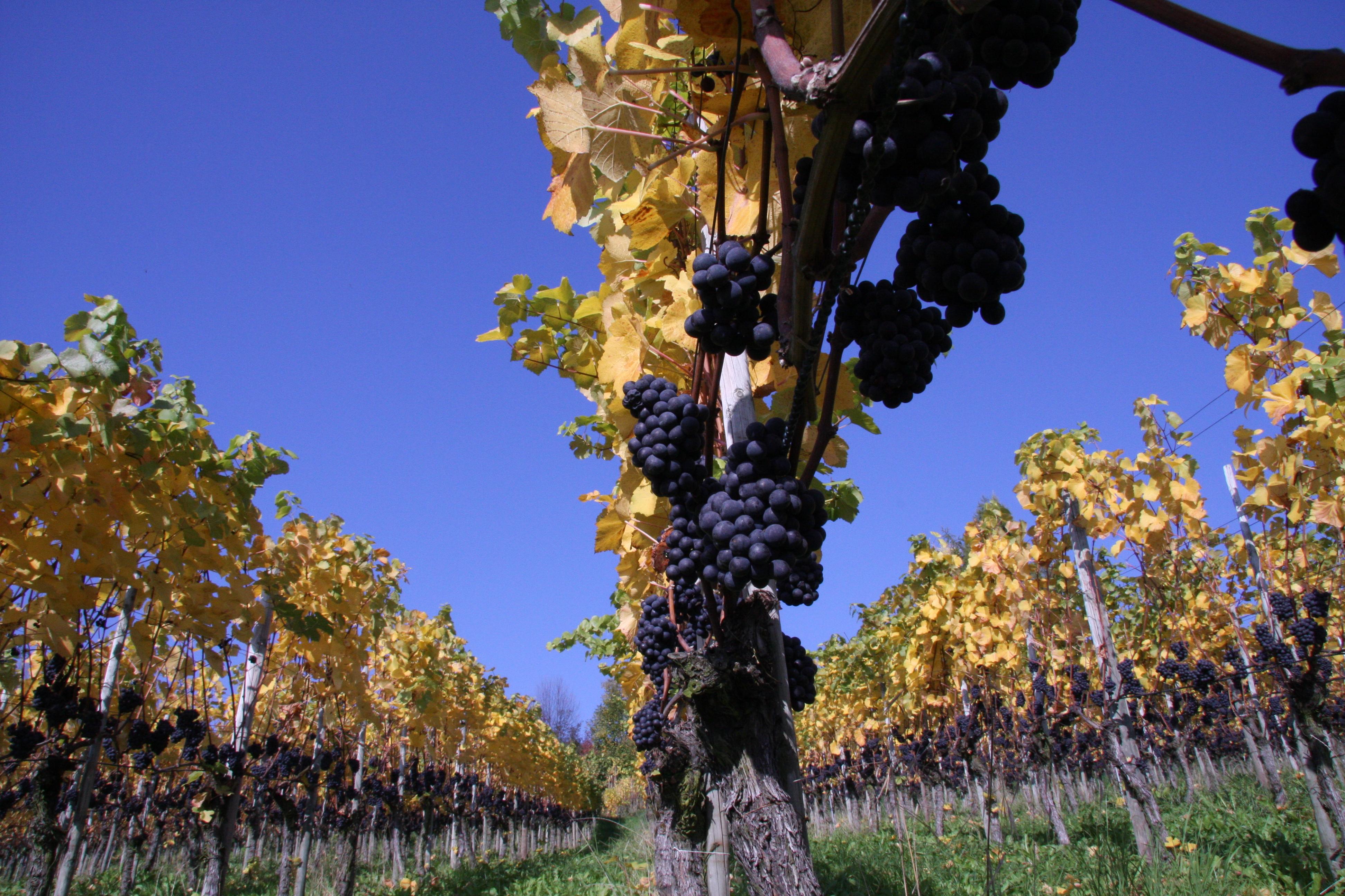 Wein- und Gourmetwanderung