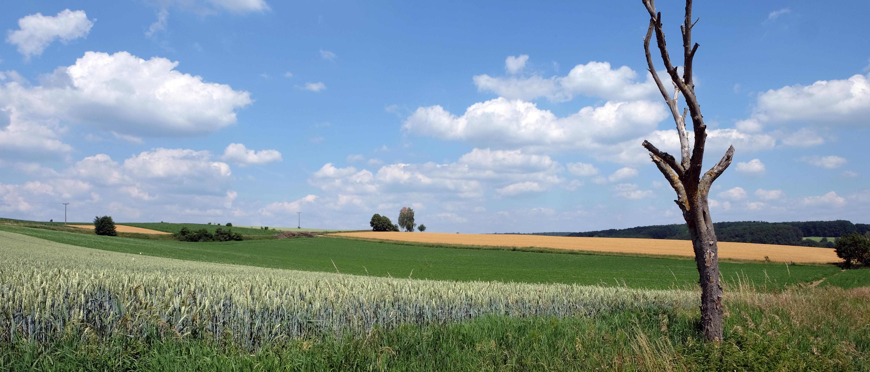 Unendliche Felder