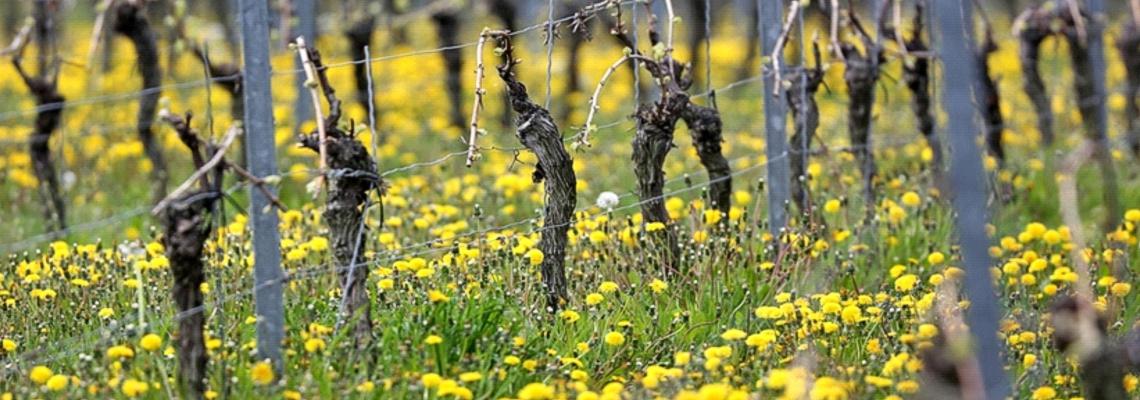VERSCHOBEN: Frühlings-Event