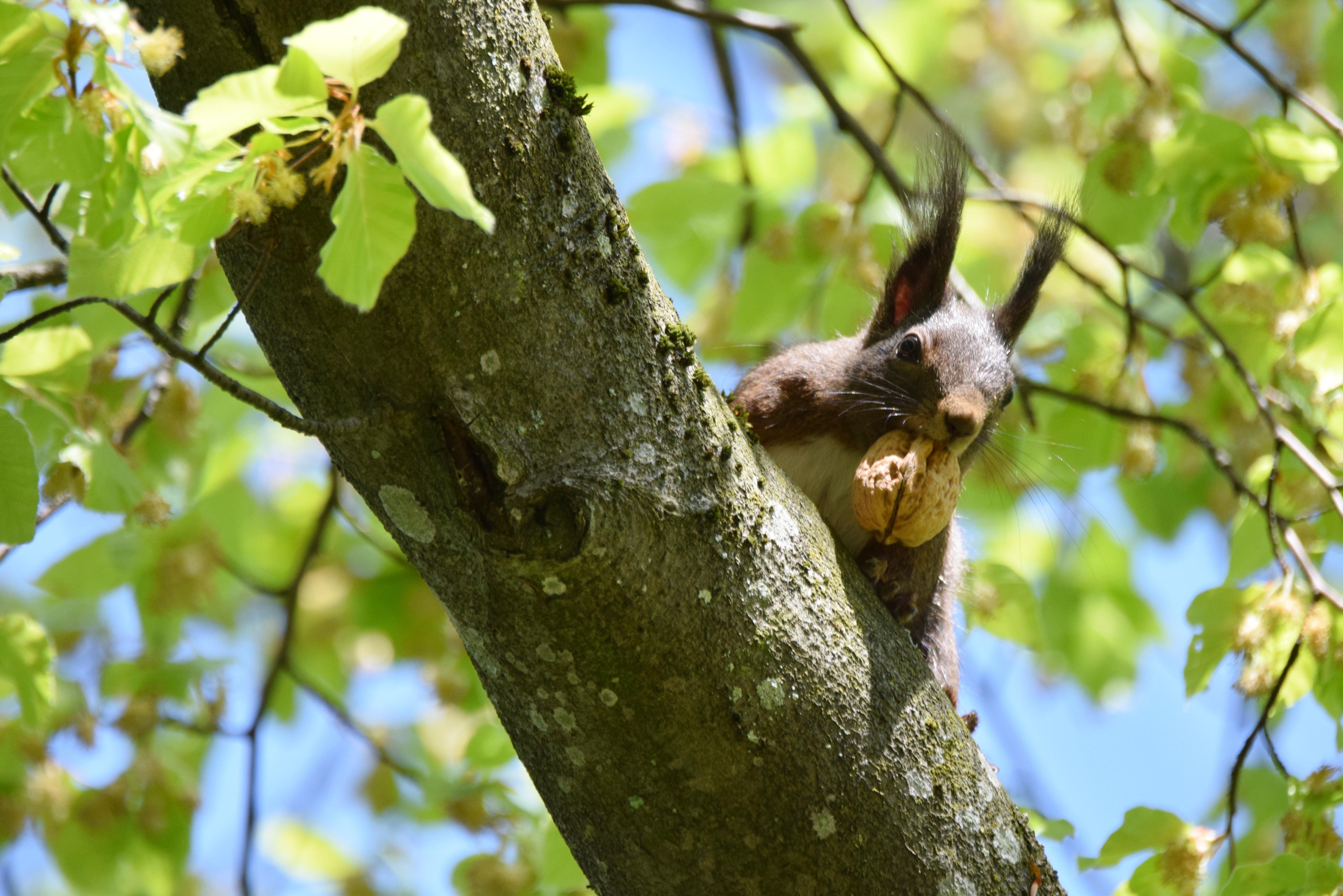 Gwunderstunde Kinder: Eichhörnchen