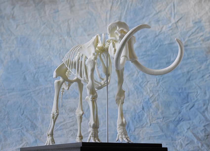 Mammuts - Zuger Riesen zeigen Zähne