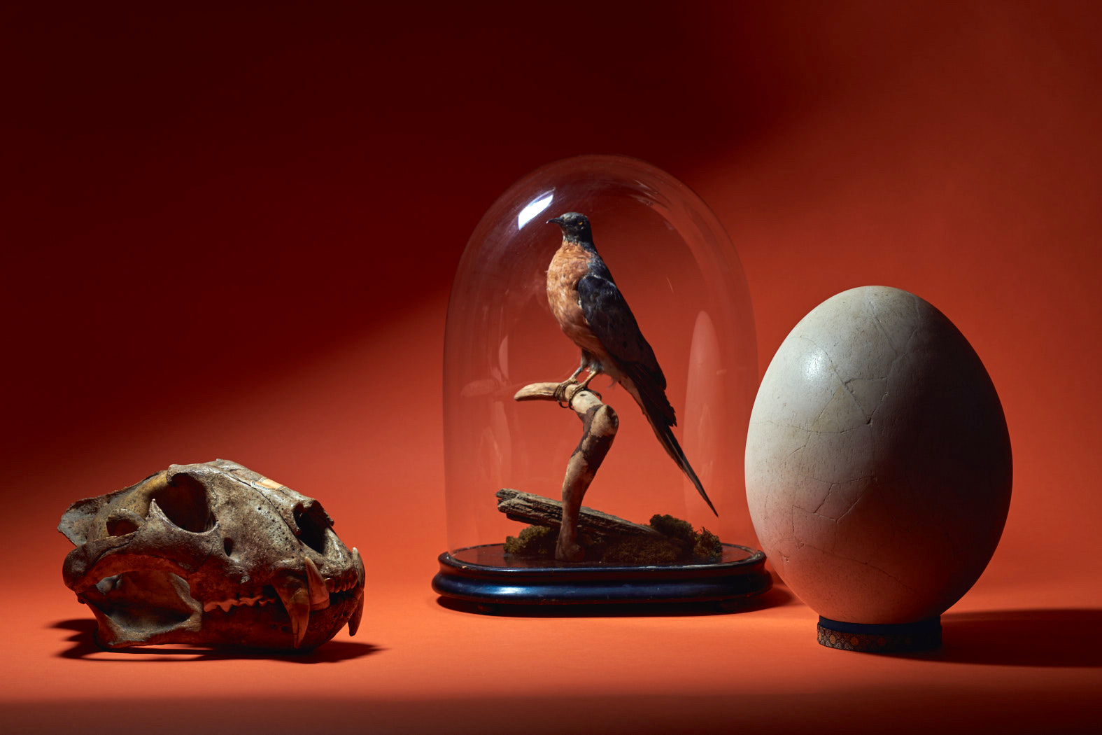 Christian Link: Wunderkammer - Collecting the World